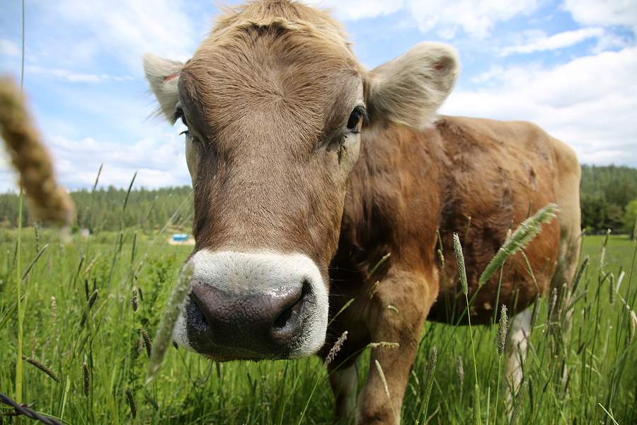 Why Foodies Swear by Sustainable Local Meat
