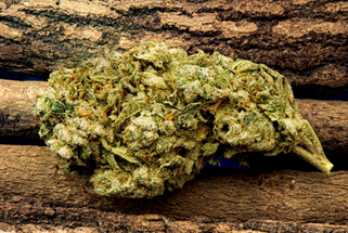 5 Best Medical Marijuana Strains Across the Country