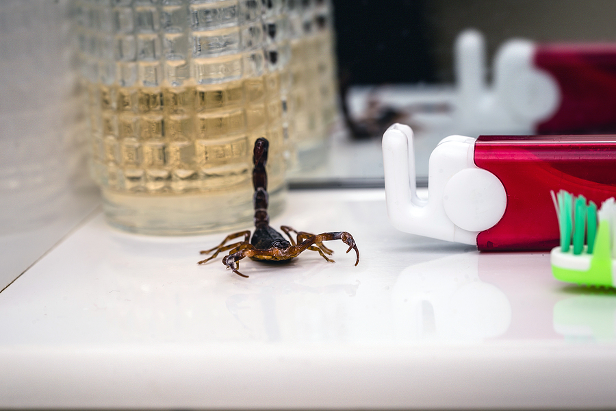 Here's How To Get Rid Of Scorpions In Your Home