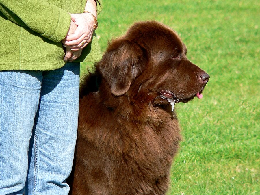 Fundamentals of Professional Dog Training Every Responsible Dog Owner Should Know