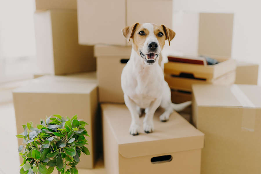Moving Abroad With Your Pet? Here's a Checklist of Things You Need To Know