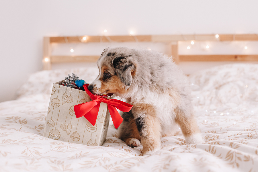 How to pick the best gift for your dog