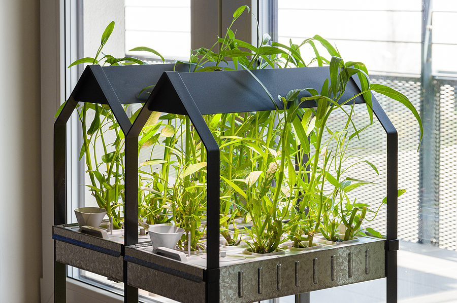 Hydroponic Gardening: What You Need to Get Started