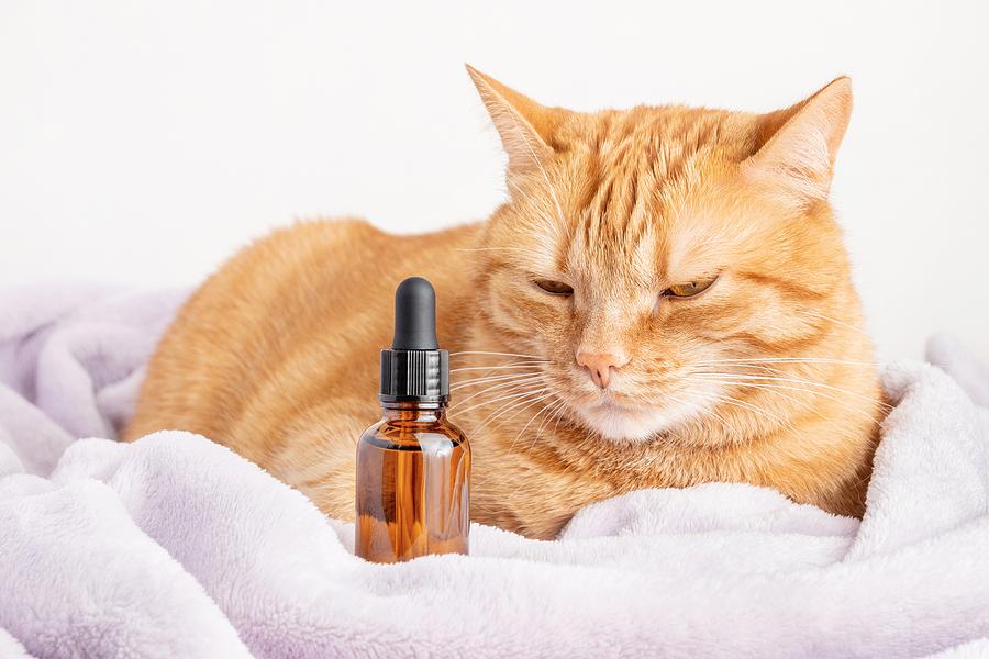 Should Your Cat Try CBD Treats?