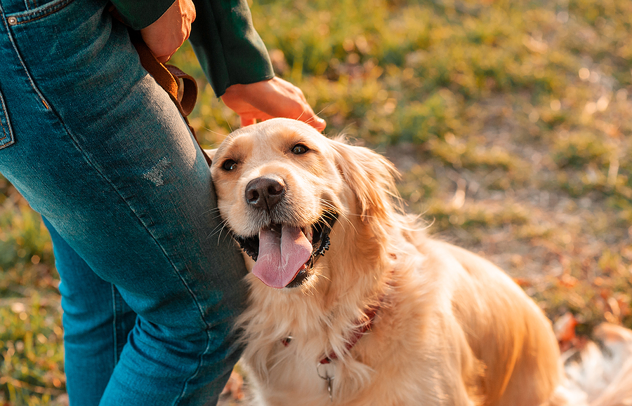 Top Health Care Tips Every Dog Owner Needs to Follow