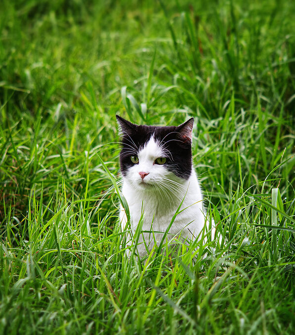 Top Safety Tips to Let Your Indoor Cat Enjoy Their Outdoor Life