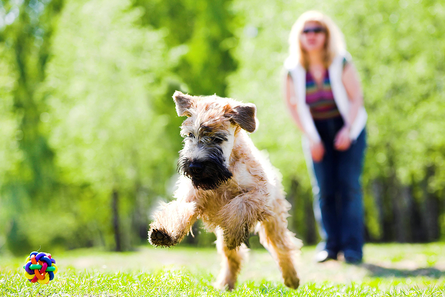 What to Do When Your Dog Runs Off-Leash