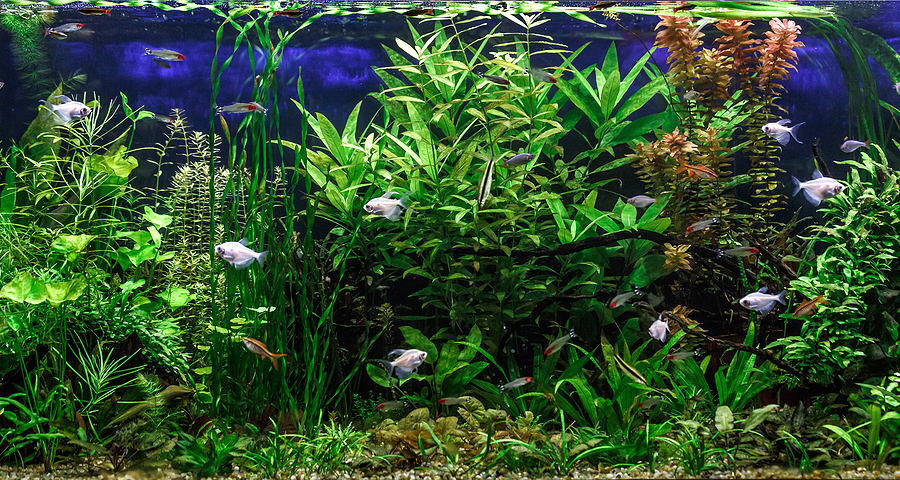8 Best Kept Secrets To Setting Up An Amazing Reef Aquarium