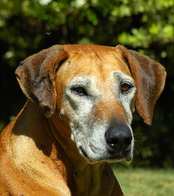 7 Ways to Make Your Home More Comfortable for Your Senior Dog