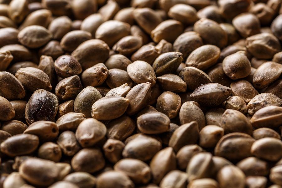 How Do You Buy Cannabis Seeds in Bulk?