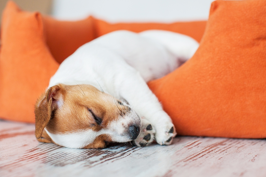 Reasons to Choose a Comfy Dog Bed to Calm Your Pet