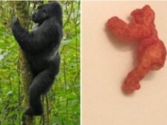 There's A Harambe Cheeto On eBay & More Incredible Links