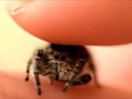 Try To Not Scream At This Little Spider Getting Pet On The Head