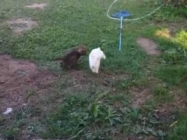 An Adorable Video Of A Kitten And Bunny Playing Tag