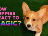 Puppies React To Magic And It Is The Cutest Thing Ever