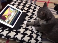 A Cat Learns How To Knead Dough From A Youtube Video