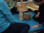 Sorry But This Bunny Is Better At Playing Jenga Than You