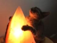 This Cat Hugging A Salt Lamp Is So Precious, It Hurts