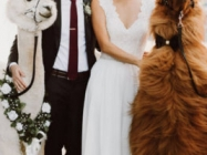 Wedding Llamas Are Now Available To Attend Your Wedding