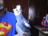 A Cockatiel Singing The Mario Bros Theme Song Is Sweet