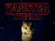 So! Hamster Things Is Stranger Things With Hamsters