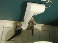 A Compilation Of Kittens And Puppies Discovering Toilet Paper