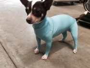 Leotards For Dogs Is A Thing That Exists Now, Okay???