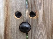 A Lady Cut Peep Holes In The Fence For The Neighbor's Dog