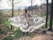 You're Gonna Want One Of These Dreamy Butterfly Wing Scarves
