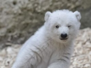 A Winking Polar Bear Baby & More Incredible Links
