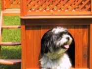 Wooden Small Pet Home