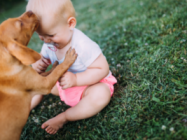 What New Moms Should Know About Dogs and Kids