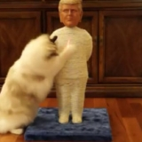Trump Cat Scratching Post