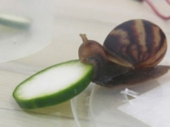 A Happy Snail Eating A Cucumber & More Incredible Links