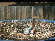 A Guy Leaps Onto A Trampoline Covered With 1000 Mouse Traps
