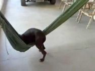This Puppy Getting Cozy In A Hammock Is Sooo Cuuuute