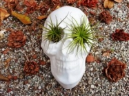 These Skull Planters Are Cute AND Totally Bad To The Ass