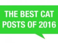 The Best Cat Posts Of 2016