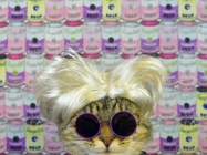 Stop What You're Doing Right Meow: The Cat Art Show Is Back