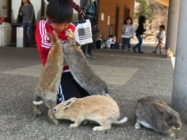 See What It's Like To Experience Japan's Rabbit Island!