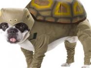 Halloween Tortoise Dog Costume
