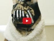 Eeek! BaneCat Terrorizes Owner