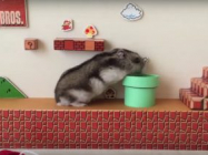 Hamsters Playing Super Mario Bros IRL Is The Best Thing Ever