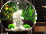 Unique Aquariums And Terrariums For Your Home