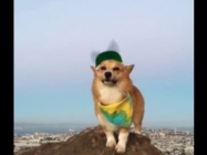 This Corgi In A Propeller Hat Is The Best Thing You'll See Today