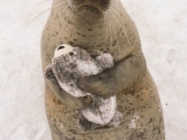This Seal Hugging His Seal Stuffed Animal Is So Sweet