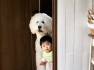 Cute Friendship of the Baby And The Giant Dog