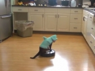 Cat In A Shark Costume Riding A Roomba