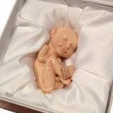 3D Printed Fetus Replica