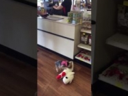 Watch This Tiny Dog Pick Out The Biggest Toy And Take It Home